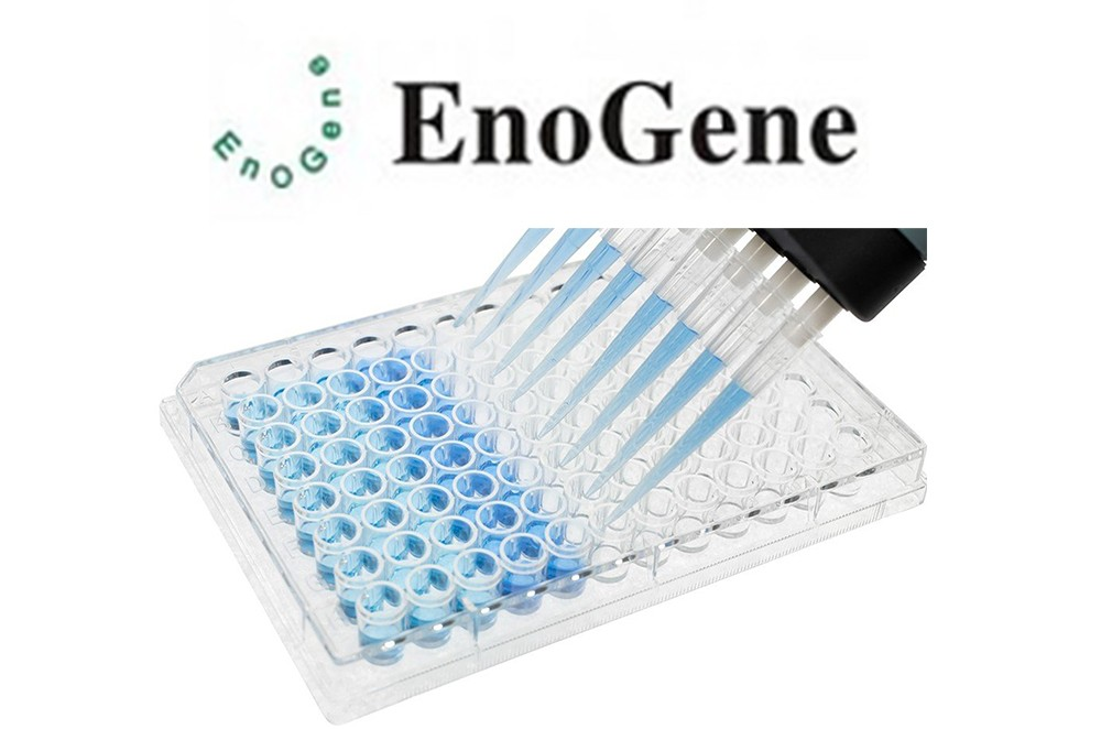 E16HE0087 ELISA Packege from EnoGene