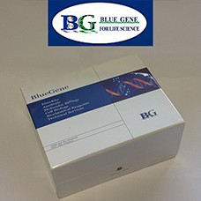 Preview ELISA kit package from Bluegene BG