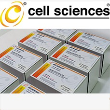 Human CCR2/CD21 ELISA Kit