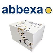 Preview ELISA Kit Package from Abbexa