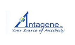 Antagene